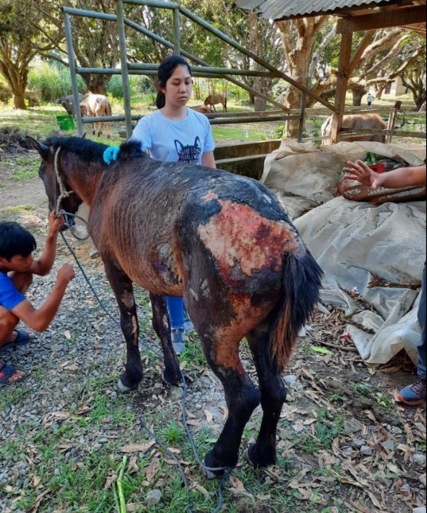 RELIEF FOR THE ANIMALS OF TAAL - BEACH BORN