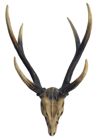 160454	 Stag Antlers Wall Décor