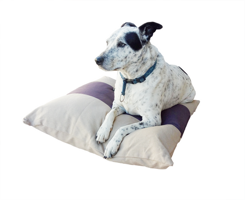 900110 Jack Bow Wow Pet Cushion