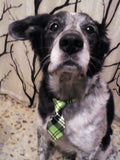Green Check-Stripes Dog Tie