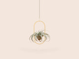 Plant Mobile | Oval Plant Mobile | Oval, Interior, Small Good Things, littlebelleandbeau- littlebelleandbeau