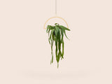 Plant Mobile | Semicircle Plant Mobile | Semicircle, Interior, Small Good Things, littlebelleandbeau- littlebelleandbeau
