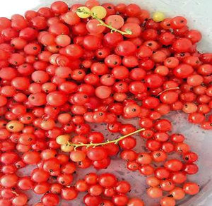 20 Red Lake Currant Seeds - Rancupid Mall