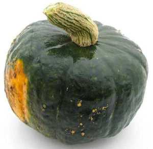 Winter Squash Burgess Buttercup 25 seeds * Heirloom * Non GMO * CombSH K25