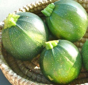 Round Zucchini Summer Squash 25 seeds * Heirloom * Non GMO * CombSH H42