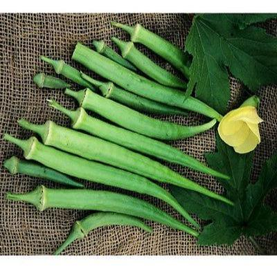 150 Perkins Long Pod Okra seeds * Heirloom * Non GMO * CombSH M45 - Rancupid Mall