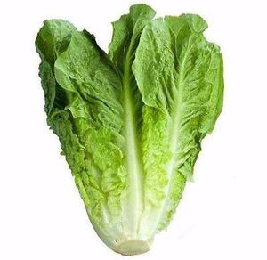 Parris Island Cos Romaine Lettuce Lactuca sativa 3000 seeds * Vegetable * CombSH