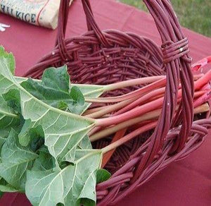 Victoria Rhubarb 50 seeds * Non GMO Vegetable * CombSH B58