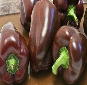 50 Sweet Pepper seeds Chocolate Beauty Heirloom CombSH A17 - Rancupid Mall