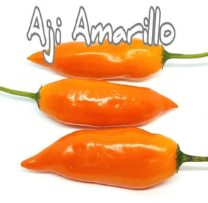 (25+) Aji Amarillo Pepper Seeds - Rancupid Mall