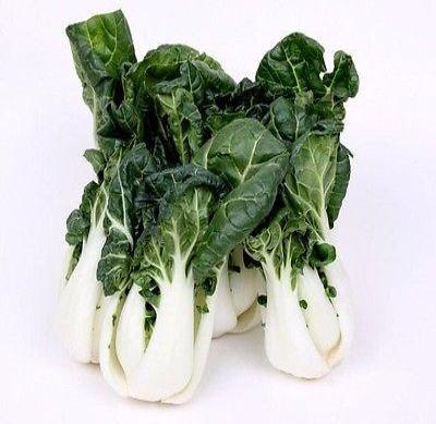 Canton Bok Choy ( Pak Choi ) 2000 seeds *Asian Cuisine * ez grow * CombSH K42 - Rancupid Mall