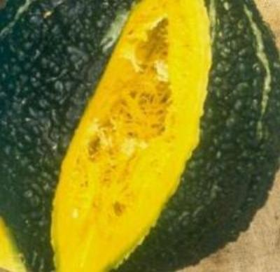 Heirloom Winter Squash CHICAGO WARTED HUBBARD 20 SEEDS 10-16 LB SWEET SQUASH - Rancupid Mall