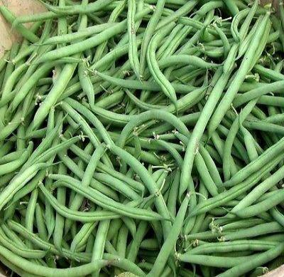 Bush bean Blue lake 274- (25 seeds) * Heirloom * Non GMO * CombSH K26 - Rancupid Mall