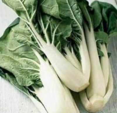 Heirloom Chinese Cabbage CANTON PAK CHOI Bok Choi❋4000 SEEDS❋Asian Greens - Rancupid Mall