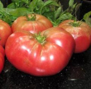 Heirloom Tomato MORTGAGE LIFTER❋100 Seeds❋HUGE❋Heavy Yields Drought Tolerant - Rancupid Mall