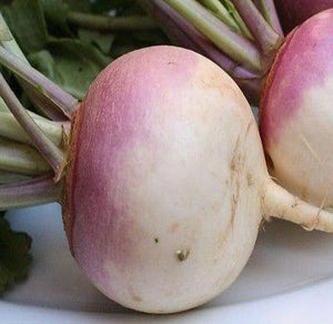American Purple Top Rutabaga 1000 seeds * Non GMO* EZ grow E84 - Rancupid Mall
