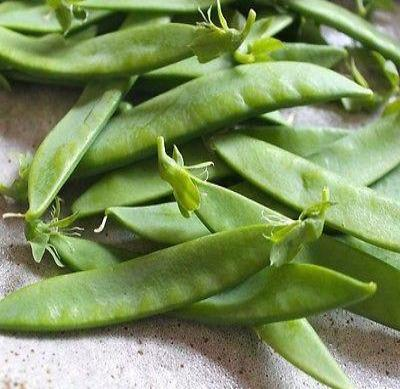 Oregon Giant snow pea 25 seeds Pisum sativum * Heirloom * Non GMO * CombSH J36