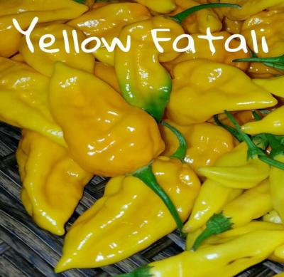 (25+) Yellow Fatali Pepper Seeds - Rancupid Mall