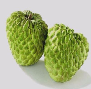 Sugar Apple 5 seeds Annona squamosa * Tropical Fruit * Rare * CombSH H26