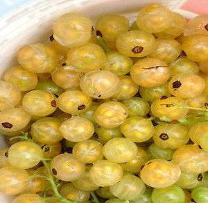 20 White Currant Seeds - Rancupid Mall