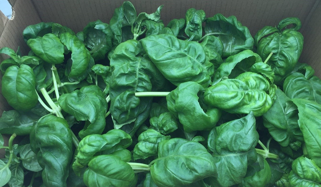 Basil--Not sold online