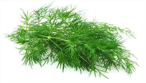 Green Fennel--Special Request/Not sold online