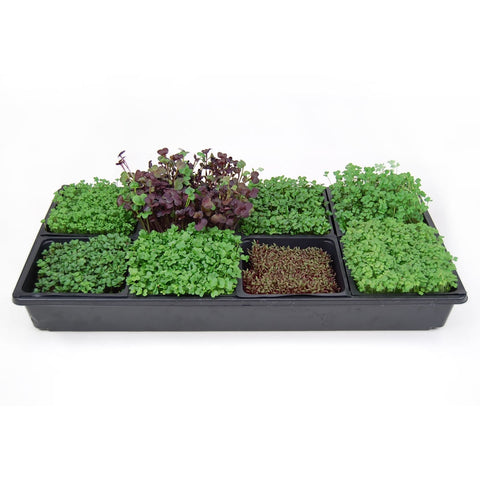 FFM Living Micro Green Tray--Not sold online