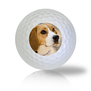 Beagle Golf Balls - Found Golf Balls