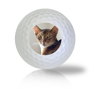 Abyssinian Cat Golf Balls - Found Golf Balls