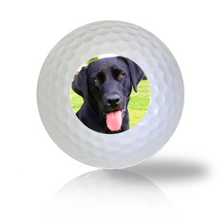 Black Lab Golf Balls Used Golf Balls - Foundgolfballs.com