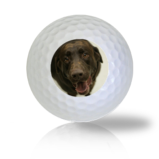 Chocolate Lab Golf Balls Used Golf Balls - Foundgolfballs.com