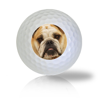 English Bulldog Golf Balls - Found Golf Balls
