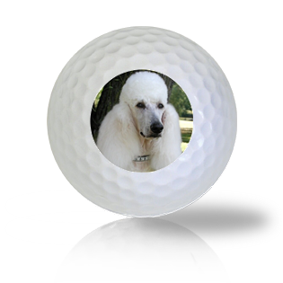 French Poodle Golf Balls