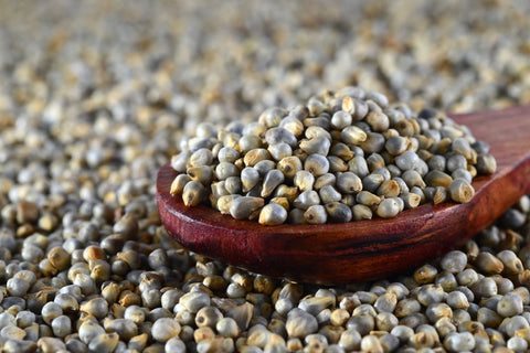 Bajra Pearl Millet - Singal's - Indian Grocery Store