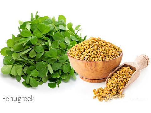 Indian Grocery Store - Fenugreek Methi - Singal's