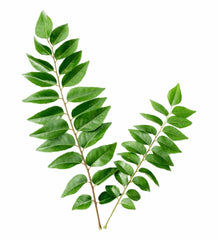 Curry Leaves - Indian Spices - Singal's - Indian Grocery Store