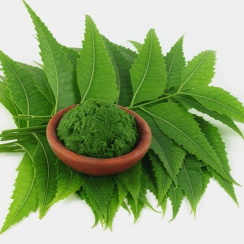 Neem Powder - Singal's - Indian Grocery Store