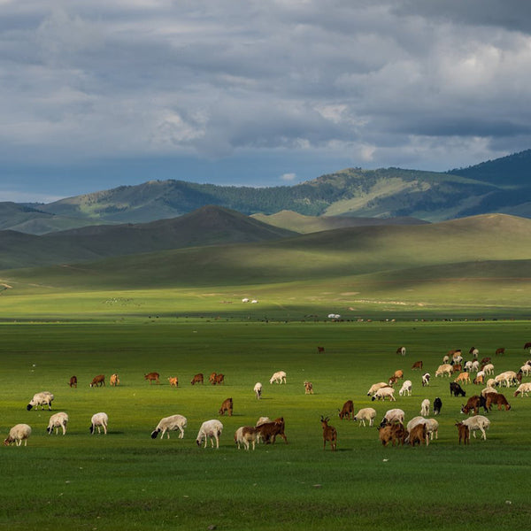 Traditional Nomadic Mongolian Culture