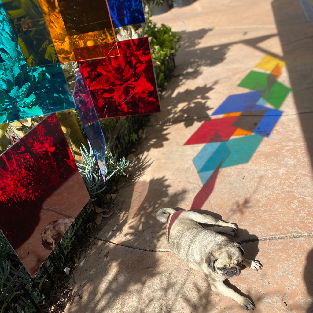 Cute sleepy pug with multi colored hanging art mobile installation in succulent garden with stunning reflective colors on the ground by AtomicMobiles.com