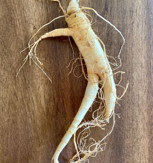 IMMUNE BOOSTING AMERICAN GINSENG ROOT