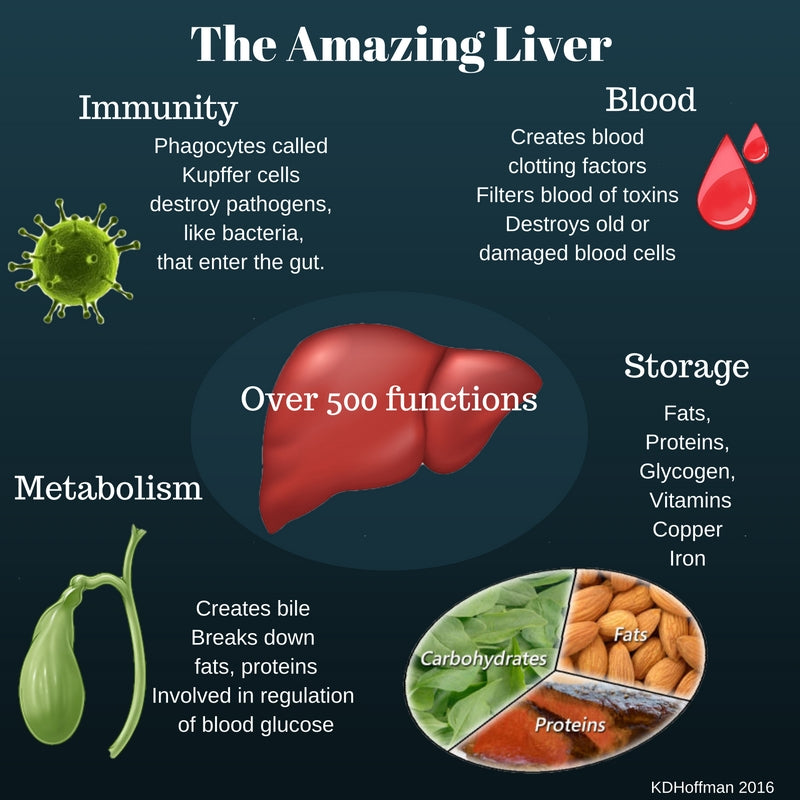 5 Things You Should Be Kind to Your Liver