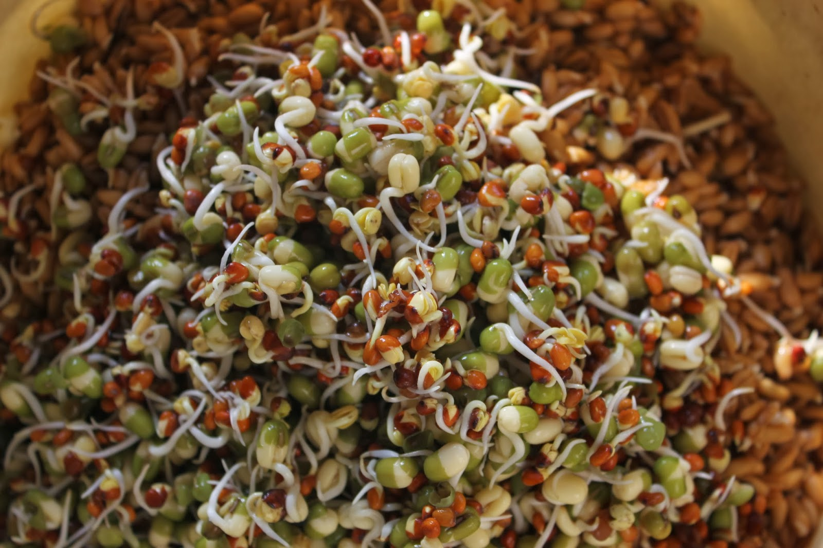 Why Should I Soak or Sprout Grains? And How Do I Do It?