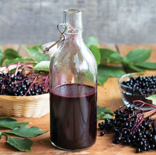 Elderberry: A Natural Remedy for Mild Colds and Flu? Can you make Elderberry Syrup in your VitaClay?