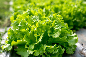 Lettuce: Sex Booster In Your Slow Cooker Foods That Improve Libido