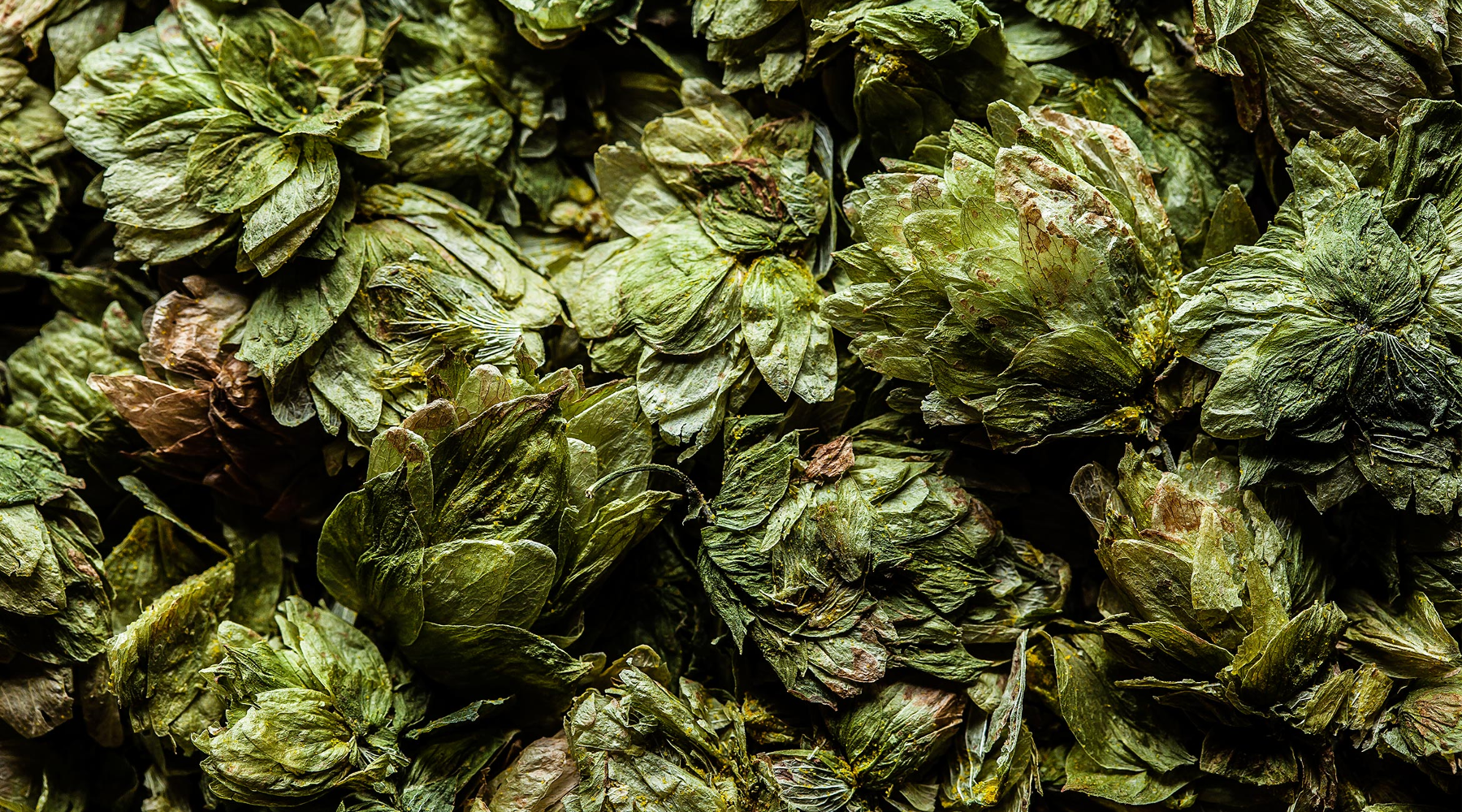 Dried Mosaic Hop Cones