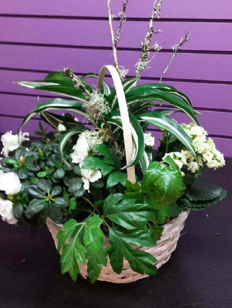 White and Green Planter by 5th Street Florist in Courtney, BC