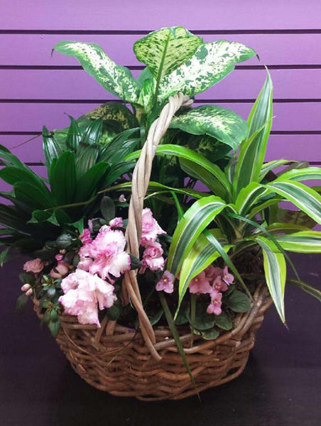 Colour in a flowering planter by 5th Street Florist
