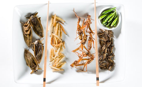 Edible Insects May Be  Coming To A European Supermarket Near You (Once Approved By EU)