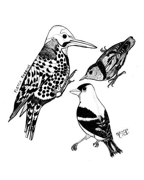 Three Birds - print