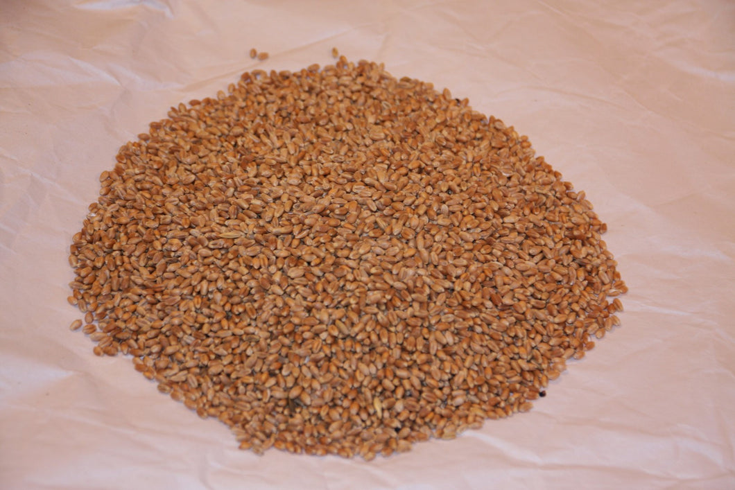 Growing Mediums - Hard Red Wheat Grain (Organic) (5kg)